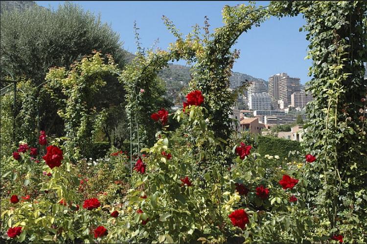 Ο κήπος με τις τριανταφυλλιές της Πριγκίπισσας Grace στο Μονακό - Princess Grace Rose Garden de Monaco.